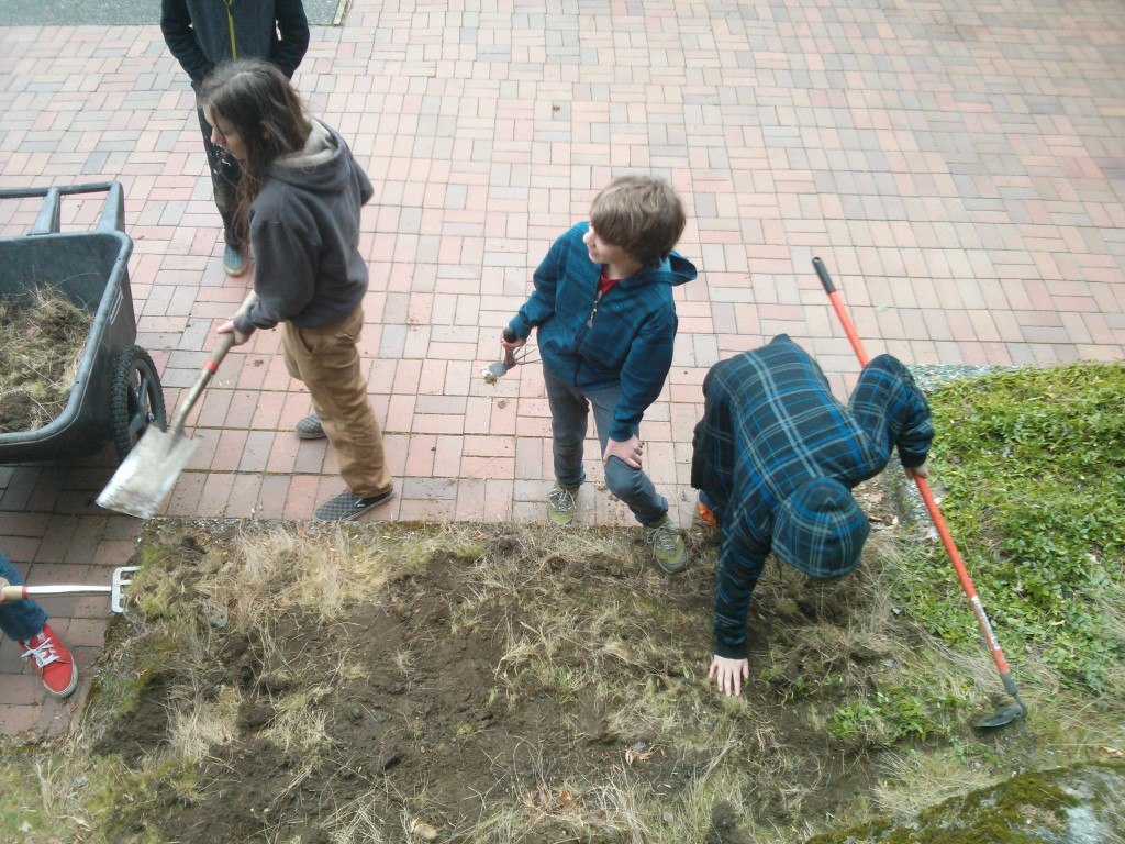 Digging up the grass