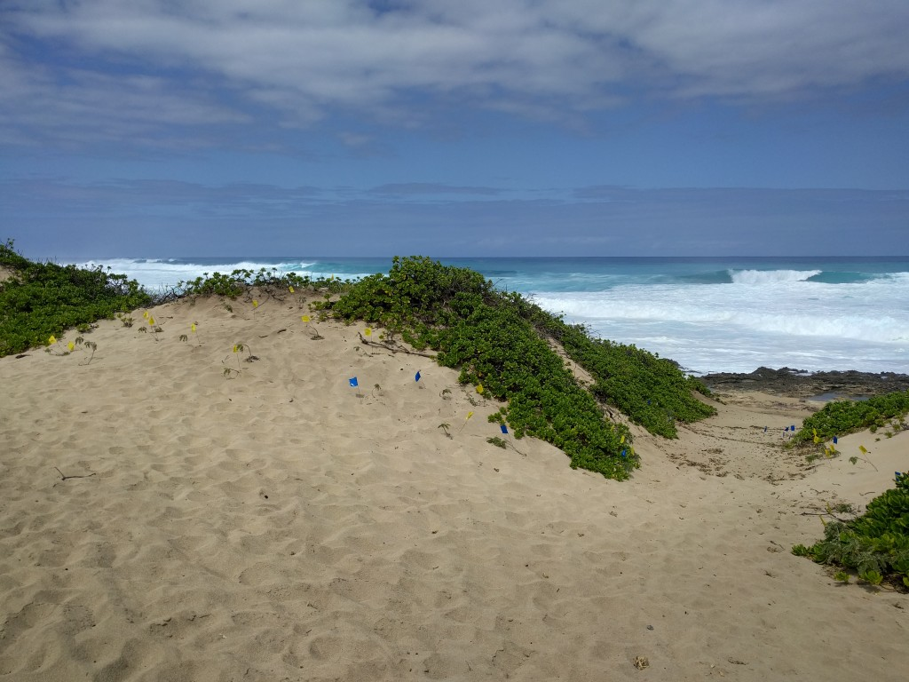 The Dunes at Kaana point