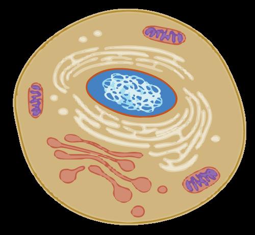 alc-network-membrane-cell